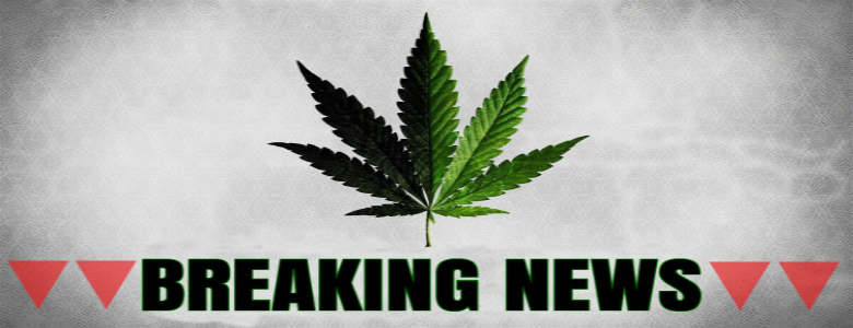 Cannabis breaking news